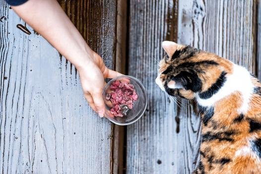 akcesoria do karmienia kota
