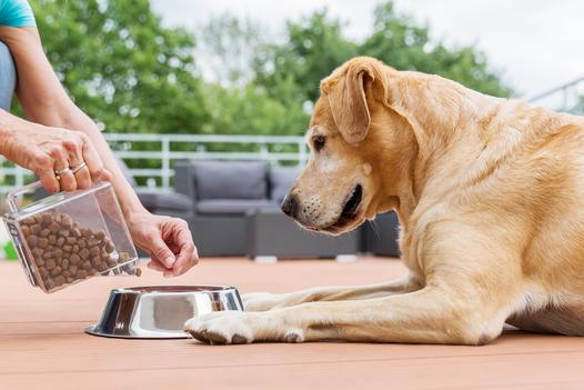akcesoria do karmienia psa