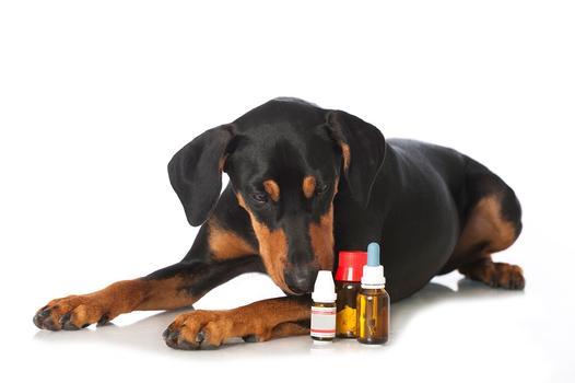 lekarstwa dla zwierząt