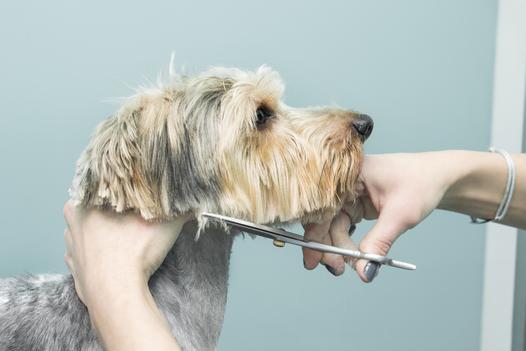 strzyżenie psa