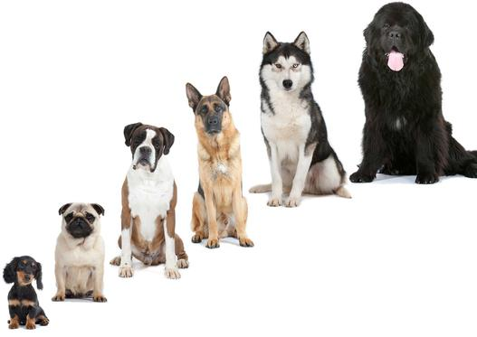 rankingi psów