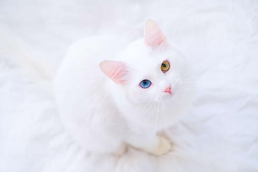 średnie koty