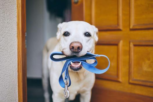 smycze dla psów