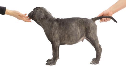 umaszczenie psa