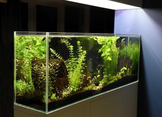 oświetlenie akwariowe