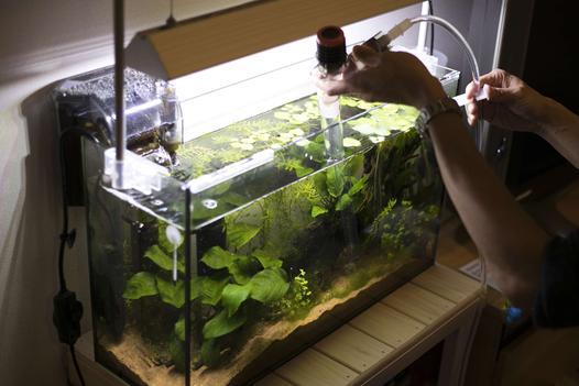 oczyszczanie wody w akwarium