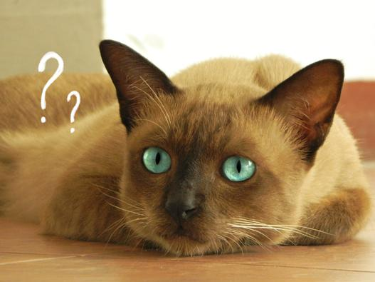 pytania o koty