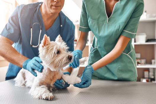 choroby zwierząt