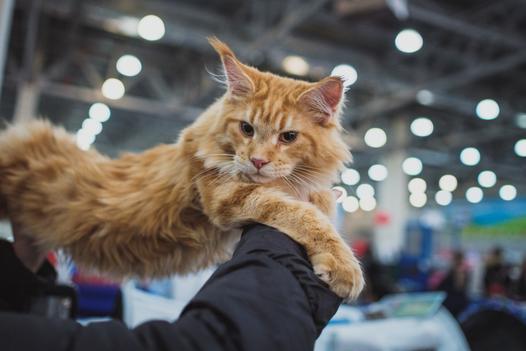wystawa kotów