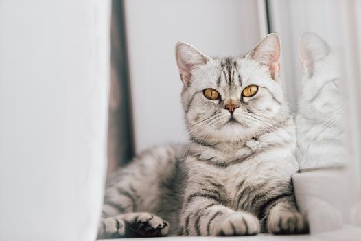 umaszczenie kota
